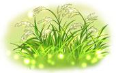稲穂に成長し実をつける